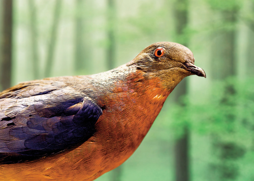 Scientists try resurrecting  extinct species