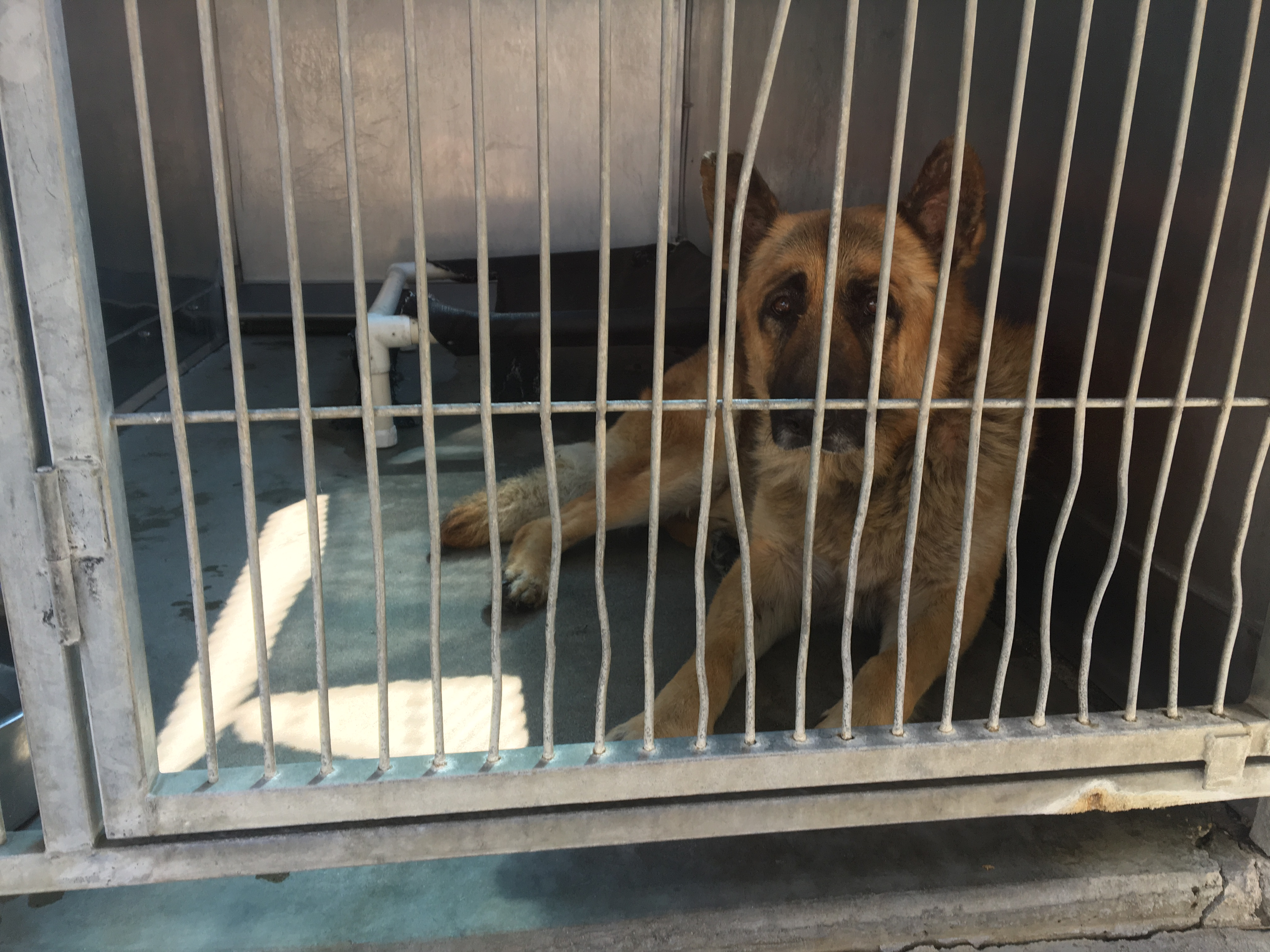 Resolving pet abandonment in Inland Empire