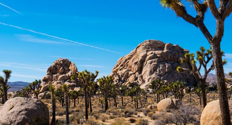 Artists in Residence Program: Mojave National Preserve