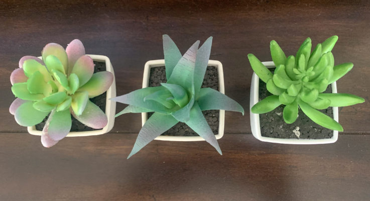 Best Plants for Busy People