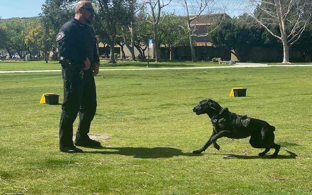 CSUSB officer shares what it is like working in the police department and with his K-9, Vader